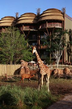 #PassPorter- On my dream vacation I would stay at my favorite Disney resort- the Animal Kingdom Lodge.