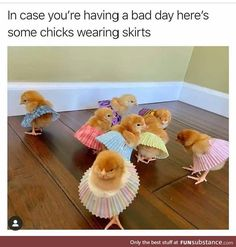 Always makes me happy 😂💀 - Cutest Baby Animals Funny Animal Jokes, Funny Animal Videos, Cute Funny Animals, Funny Cute, Funny Memes, Memes Humor, Funny Videos, Funny Drunk, Drunk Texts