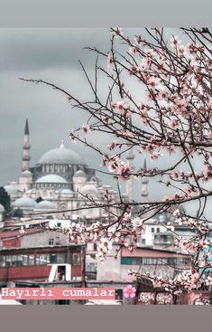 Learn Quran, Dream City, Istanbul, Taj Mahal, Flowers, Travel, Argo, Viajes, Destinations
