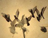 birds via gothicrow