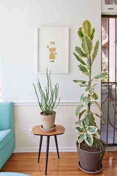 I want to fill my apartment with plants this spring!