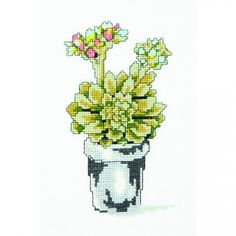 Nature Suculenta floración - Diagrama