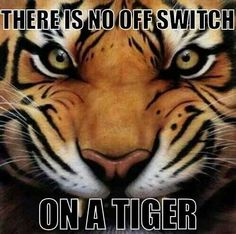 There Is No Off Switch On A Tiger...