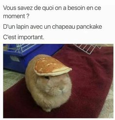 Très important - Doctor Pin Really Funny, Funny Cute, Hilarious, Funny Animal Pictures, Funny Animals, Cute Animals, Funny True Quotes, Stupid Funny Memes, Rage