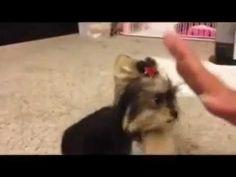 Dog doll  ( Catel foarte dragut )