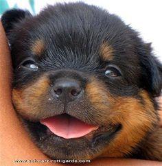 cute-cute-cute...... :)