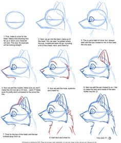 How to Draw: Canine Profile Tutorial by *JustAutumn on deviantART