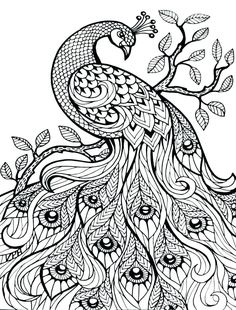 Pin By Maggie Rodriguez On Peacocks Pinterest Coloring Pages