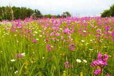 Urlaub im Salzburger Land Hotels, Plants, Chalets, Vacation, Plant, Planets