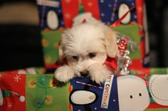 """""""Oh, what do we have here?? I see mom didn't do a very good job of hiding the Christmas presents. Let me just take a peek."""" 