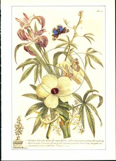 Botanical Illustration of Flower Bouquet & Butterfly