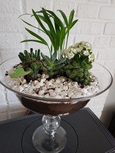 Terrarium, Succulents, Home Decor, Terrariums, Decoration Home, Room Decor, Succulent Plants, Home Interior Design, Home Decoration