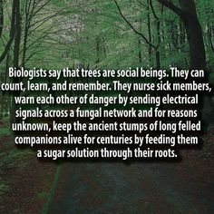 "~ German forest ranger Peter Wohlleben says trees are social beings, interconnected thanks to a natural network. He wrote ""The Hidden Life of Trees"" The More You Know, Good To Know, Did You Know, The Words, Planet Poster, Save Our Earth, Wtf Fun Facts, Random Facts, Random Stuff"