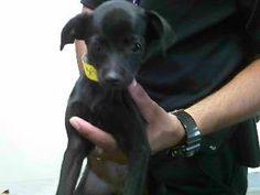 15-00305 Rescue Puppies, Dogs, Animals, Animales, Animaux, Pet Dogs, Doggies, Animal, Animais