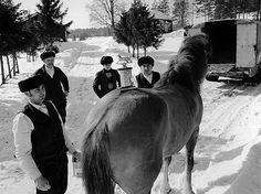 A winner: Romani men with a Finnish horse in Kauhajoki. Photo: Mikko  Savolainen, 1971