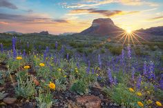 Big Bend - Bluebonnet Sunrise 1 photo
