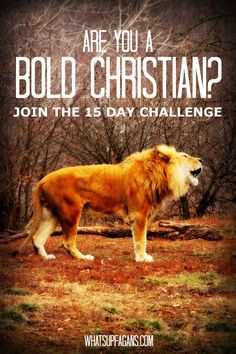 I signed up for the 15-Day #BoldChristian campaign! Come do it with me! We should all stand for truth, faith, and Jesus Christ.