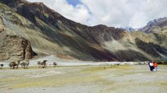 nubra-white-sand-dunes, Nubra is a tri-armed valley located to the north east of Ladakh valley. Diskit the capital of Nubra is about 150 km north from Leh town, the capital of Ladakh district, India. Local scholars say that its original name was Ldumra.