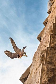 Sagrada Familia inhabitants!!!!!! isn't it cool??? Gaudi, Barcelona, Architecture, Animals, Sagrada Familia, Arquitetura, Animales, Animaux, Barcelona Spain
