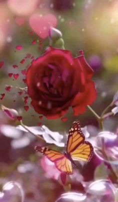 Beautiful Flowers Pictures, Beautiful Flowers Wallpapers, Beautiful Rose Flowers, Beautiful Nature Wallpaper, Flower Pictures, Beautiful Birds, Good Morning Beautiful Gif, Good Morning Flowers Gif, Hd Flowers