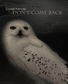 awww...Hedwig