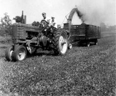(Submitted by Ernest Little)  James Little and his son, Ernie, ride their John Deere B 1947 tractor. Here, the pair are chopping hay. The ph...