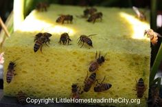 Use sponges to prevent bees from drowning in their drinking water- smart!!