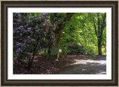 Jenny Rainbow Fine Art Photography Framed Print featuring the photograph In Rhododendron Woods 33 by Jenny Rainbow Framing Photography, Fine Art Photography, Framed Artwork, Framed Prints, Wall Art, Fashion Room, Art Techniques, Evergreen, Home Art