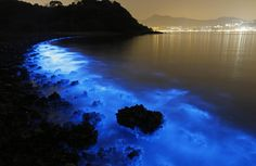 Bring on the Night | Bioluminescent Beaches
