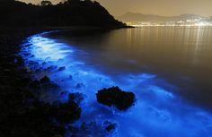glowing beach, bioluminescent plankton, glowing beach bioluminescent plankton, bioluminescence, bioluminescence phenomenon, glowing beach pictures, glowing beach video, bioluminescence picture, bioluminescence video, Bioluminescent Plankton on the Shores of Hong Kong
