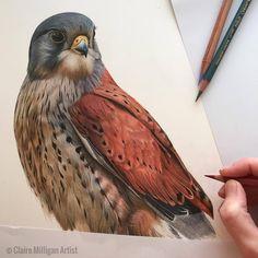 Görüntünün olası içeriği: kuş kuru boya в 2019 г. kuş и resi Bird Drawings, Realistic Drawings, Animal Drawings, Pencil Drawings, Crayons Pastel, Pastel Pencils, Colored Pencils, Shading Drawing, Nature Drawing