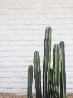 Cactus | Plants | The Lifestyle Edit