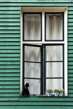 The cat and the window, Amsterdam