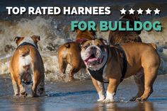Best Bulldog Harness - Check the detailed buyer�s guide and product review