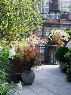 Dress Up Decks and Patios Don't limit ornamental grasses to beds and borders in your landscape. Grow them in containers to add drama to decks and patios. Here, purple fountaingrass adds elegant texture to a rooftop garden. Landscaping Tips, Plants, Garden, Rooftop Garden, Landscape Design, Ornamental Grasses, Grass, Perennials, Container Gardening