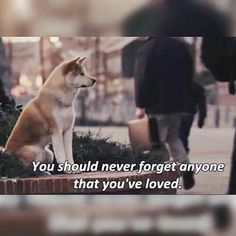 Hachiko, Akita Dog, Puppy Clothes, Powerful Quotes, Dog Quotes, Demons, Dog Breeds, Dogs And Puppies, Movie Tv