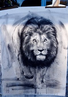 Lion charcoal drawing. Art by Catherine Ingleby