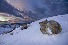 500px / Sunset Slumber by Jess Findlay