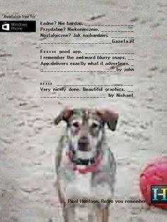 Pies sfotografowany przy użyciu aplikacji Pixel Heritage.
