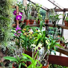 Happiness is growing orchids in a greenhouse.