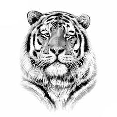 264 Meilleures Images Du Tableau Www Tattoo Ephemere Fr Believe