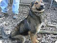 6/8/15 Hello! I am looking to be your best friend. I dont have anyone to love because I was given up. I dont know why. I am looking to be your loving companion. I would love a forever home. Please come meet me. Please adopt me. Hugs and kisses from me to you.! Florence, KY - Shepherd (Unknown Type)/Labrador Retriever Mix. Meet Jason Nichols, a dog for adoption. http://www.adoptapet.com/pet/12791172-florence-kentucky-shepherd-unknown-type-mix