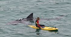 22 foot basking shark greets surfer in Cornwall, UK Orcas, Funny Animal Pictures, Funny Animals, Random Pictures, Funny Photos, Wind Surf, Basking Shark, Monster Fishing, Shark Swimming