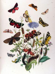 Primula veris; Plantago major; Scabiosa arvensis;...