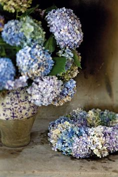 Offering an entire posy in a single bloom, no flower is quite as generous as a hydrangea. Exaggerate the abundance and painterly palette of hydrangea flowers by grouping them en masse in a lovely vase.