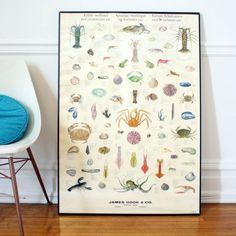 vintage science marine biology crustaceans wall par lacklusterco
