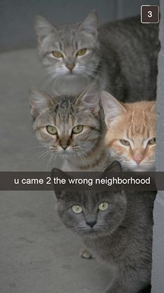 http://www.meowingtons.com/blogs/lolcats/29198465-27-snapchats-from-your-cat