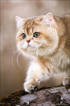 Magical Meow