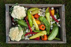 How Does Your Garden Grow? 10 Easy Tips for a Successful Edible Garden