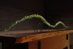 contemporary ikebana - Google Search